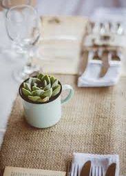 Seeds, Succulents & Eco